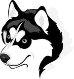 Siberian Husky. Vector image of head of the Siberian Husky dog Stock Photography