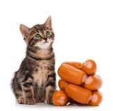 Siberian kitten Stock Photos