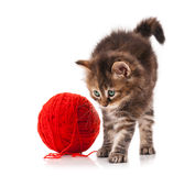 Siberian kitten Royalty Free Stock Image