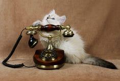 Siberian kitten with retro phone Stock Photos