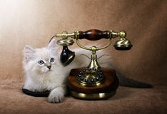 Siberian kitten with retro phone Stock Photography