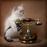 Siberian kitten with retro phone Stock Photos