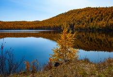 A Siberian lake. Lake in the Siberian taiga. A small Siberian lake. Siberian nature. Paints of autumn siberia. Lake in the Siberian taiga royalty free stock photo