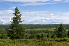 Siberian landscape. Tree line in north Mongolia Royalty Free Stock Photos