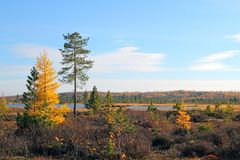 Siberian landscape Royalty Free Stock Images