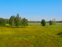 Siberian meadow with birches Royalty Free Stock Photography