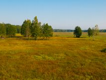 Siberian meadow with birches Stock Photo