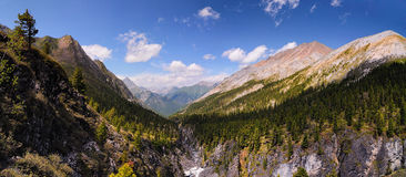 Siberian mountain forest Stock Photos