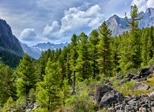 Siberian mountain taiga on cloudy summer day Royalty Free Stock Images
