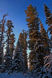 Siberian mountain taiga in winter in the Sayan mountains Stock Image