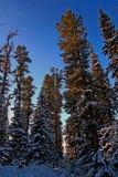 Siberian mountain taiga in winter in the Sayan mountains Stock Image