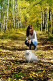 Siberian nevsky masqarade cat and young woman. In a  autumn nature Royalty Free Stock Photography
