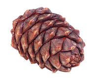Siberian pine cone Royalty Free Stock Photos