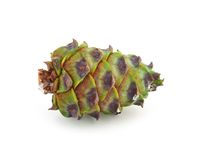 Green cedar cone Royalty Free Stock Photography