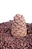 Siberian pine cone and nuts Royalty Free Stock Photos