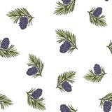 Siberian pine cones and branches. Christmas seamless pattern., vector illustration Royalty Free Stock Photo