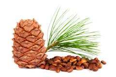 Siberian pine cones. Cones of Siberian cedar, pine cedar, nuts, wood gifts Royalty Free Stock Photo