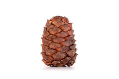 Siberian pine cones Royalty Free Stock Images