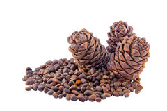 Siberian pine cones and nutlets Royalty Free Stock Photo