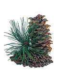 Siberian pine cones and nutlets Royalty Free Stock Photos