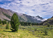 Siberian pine and mountain tundra stock photography