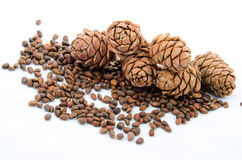 Siberian pine nuts Royalty Free Stock Image