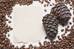 Siberian pine nuts and vintage paper sheet on white wooden table Royalty Free Stock Images