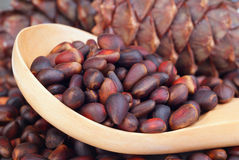 Siberian pine nuts in wooden spoon Royalty Free Stock Photography
