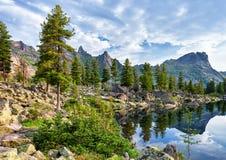 Siberian rare forest near mountain lake. Valley is of glacial origin. Lake Artists. Ergaki Ridge. Western Sayan. Russia royalty free stock photo