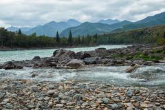 Siberian river Katun in Altai mountains Royalty Free Stock Image