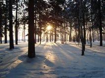 Siberian skog Arkivfoto