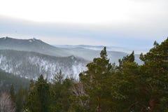 Siberian skog fotografering för bildbyråer