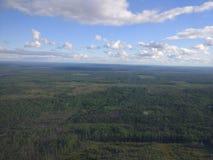 Siberian skog och himmel Arkivfoto