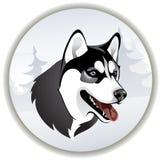 Siberian skrovligt för Head hundavel i en skog Stock Illustrationer