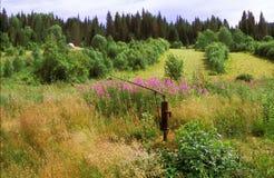 Siberian sommarlandskap royaltyfri foto