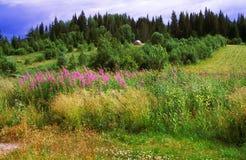 Siberian sommarlandskap Arkivbild