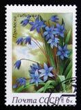 Siberian squills, från serien fjädrar blommor, circa 1983 Arkivfoton
