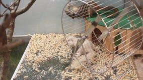 Siberian squirrels - Tamias sibiricus Stock Photo