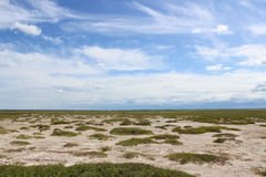 Siberian steppe. With salt soil Stock Photo