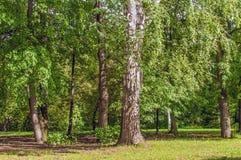 Siberian Summer Forest Stock Photo