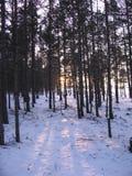 The Siberian taiga. Russia, 2007 Stock Images