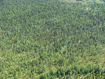 Siberian taiga - aerial view Royalty Free Stock Photography