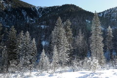 Siberian taiga at the foot of the Khamar-Daban range in the Baikal region in winter. Coniferous forest and taiga of the hill in winter at sunrise with snow Royalty Free Stock Photography