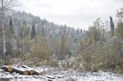 Siberian taiga. Hunting ground. The felled trees to repair the house and firewood. Stock Photography