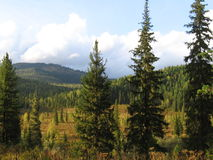 Siberian taiga. Krasnoyarsk Territory, Russia Stock Images