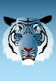 Siberian Tiger. Illustration of the Siberian tiger Stock Photo