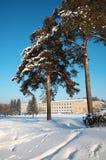 Siberian winter Stock Image