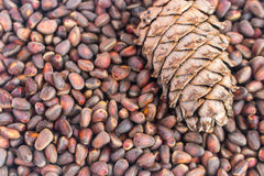 Siberisch Cedar Pine Nuts Background Stock Afbeelding