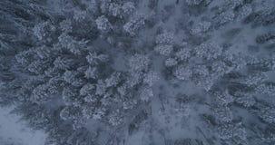 Siberisch de winterbos in Rusland, taiga 2 stock footage