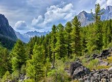 Siberische bergtaiga op bewolkte de zomerdag Royalty-vrije Stock Afbeeldingen